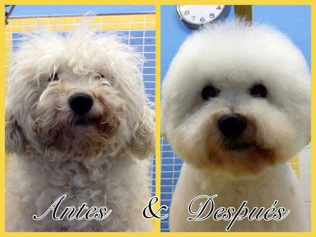 Petgrooming - Antes y después - Pet Grooming